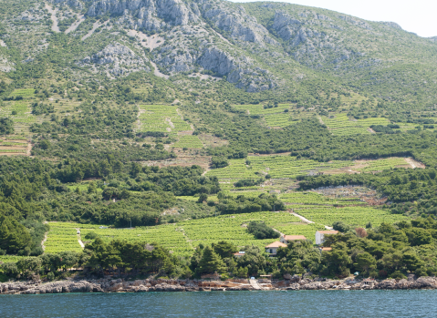 Peljesac southern slopes with Dingac