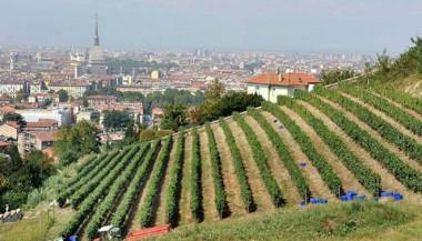 Gradski vinogradi