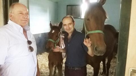 Cavalli i Korak