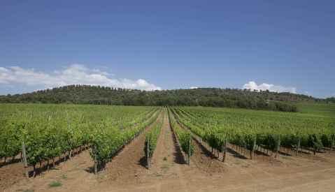 Pian delle Vigne Montalcino trsje