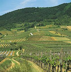 Austria vinograd