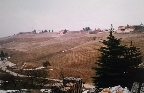 Gaja Barbaresco loza