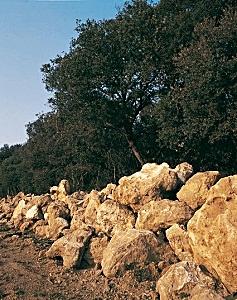 Kamenje iskopano iz tla vinograda Tenute San Guido