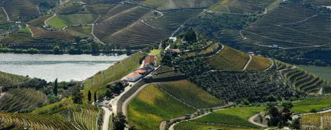 Portugal, Douro, Quinta do Crasto