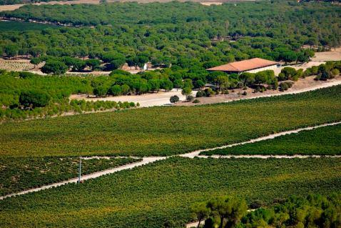 Abadia Retuerta – 180 hektara vinograda praktički u komadu