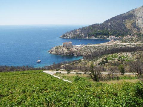 Vinarija Miljenka Grgića u Trsteniku – iz daleka, snimka je napravljena iz ovih njegovih vinogradi što se vide na slici