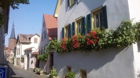 Deidesheim: posvuda zelenilo i cvijeće. Dolje je zgrada lokalne vinarske zadruge, obrasla u vinovu lozu!
