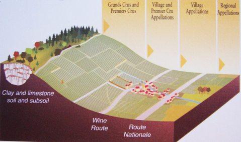 Ilustracija hijerarhije apelacija u Burgundiji: u ravnici, ispod regijske prometnice vinogradi su koji ulaze u opću i široku apelaciju Bourgogne aoc. Vinogradi na bagim kosinama oko sela u vinogradarskoj općini u općinskoj su apelaciji Villages aoc (apelaciju prati naziv sela-općine), na povišenim pozicijama odmah iznad sela i vinske ceste mogu biti i u kategoriji 1er cru. Na još višim i nakošenim položajima iznad sela pa prema vrhu brežuljka su apelacije 1er cru, te, položajno još iznad njih te na jačim kosinama apelacija grand cru