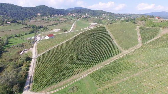Agroslavetić - vinogradi