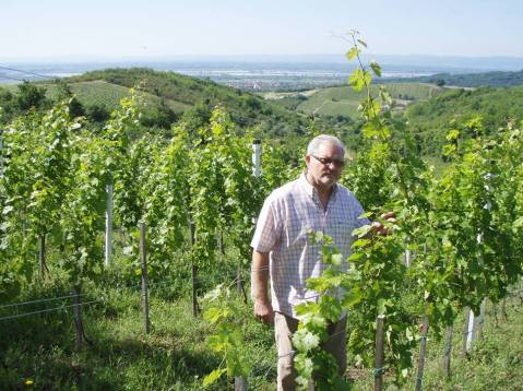 Zdravko Ilija Jakobovic, Vina Jakob: u vinogradu na 300 metara visine, ponad Stupnika/in the vineyard at 300 altitude, above the place of Stupnik