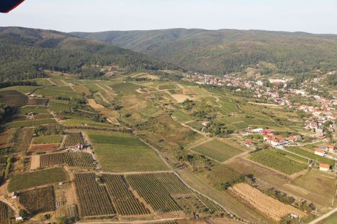 Kutjevo, vinogradi Vidim/vineyard named Vidim