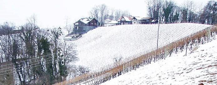 Hrvatsko zagorje, Hršak-breg, vinograd Petrač. Zima! Dakako, u podrumu, gdje grije i vince, ljepše je nego vani na -10°C