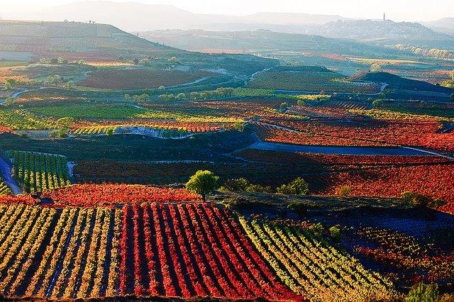 la-rioja-vinogradi