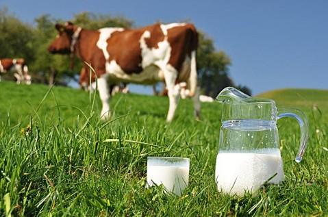 Mlijeko od krave, i tekućina od mlijeka u prahu ponuđena kupcu pod nazivom mlijeko