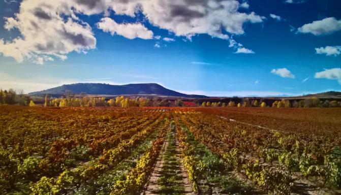 Krajolik La Rioja: žive i tople boje, atraktivna kombinacija boja, dojam skupocjenoga saga, sve dobro i održavano. OVO JE RAJ! NEKA TO BUDE BAŠ OVDJE, KAD MI DOĐE KRAJ!